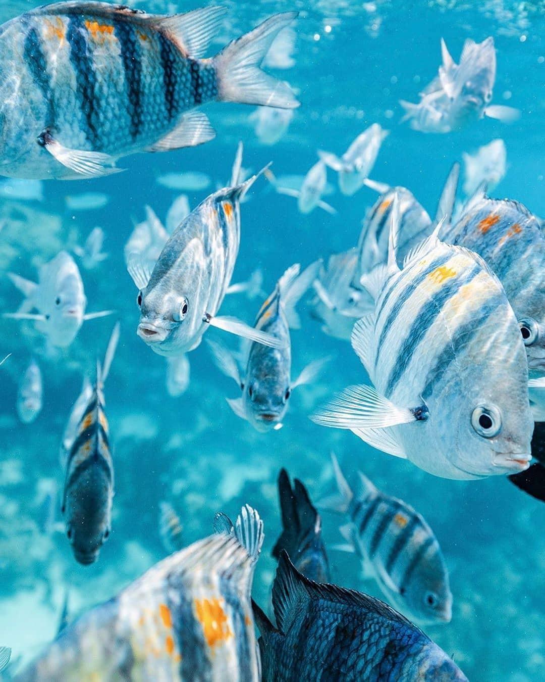 vurku.com-bahamas-CDJ5Hp2BO58