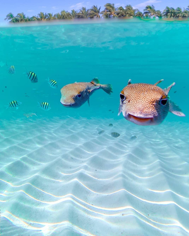 vurku.com-bahamas-CDt9giNB2Wp