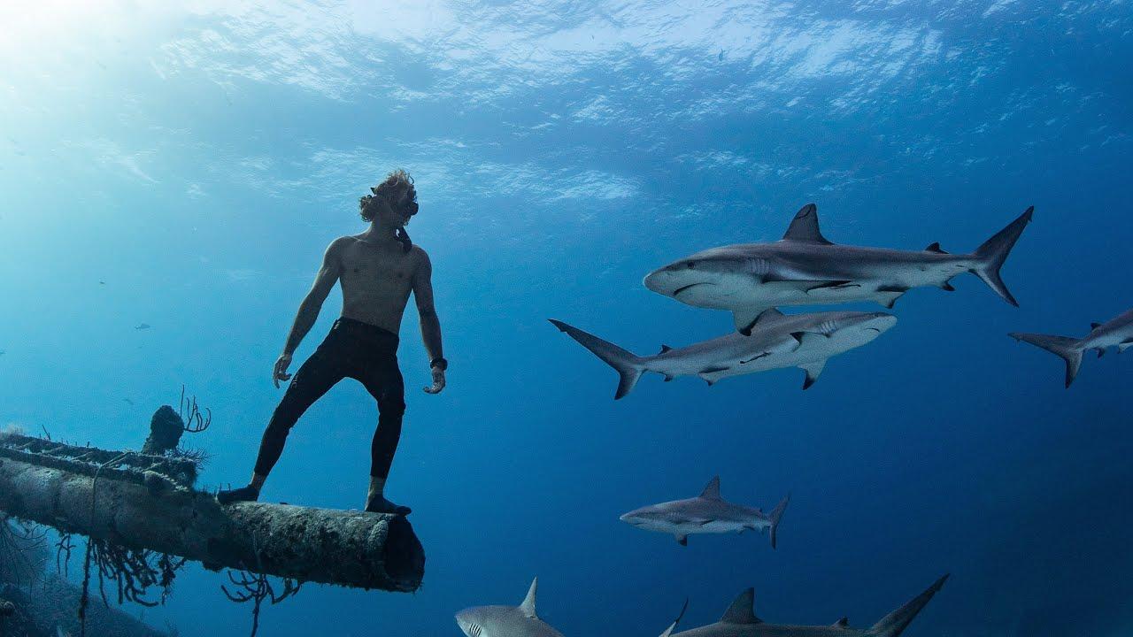 shark&diver